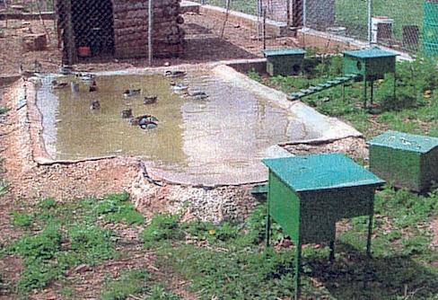 Sans titre - Bassin canard beton orleans ...